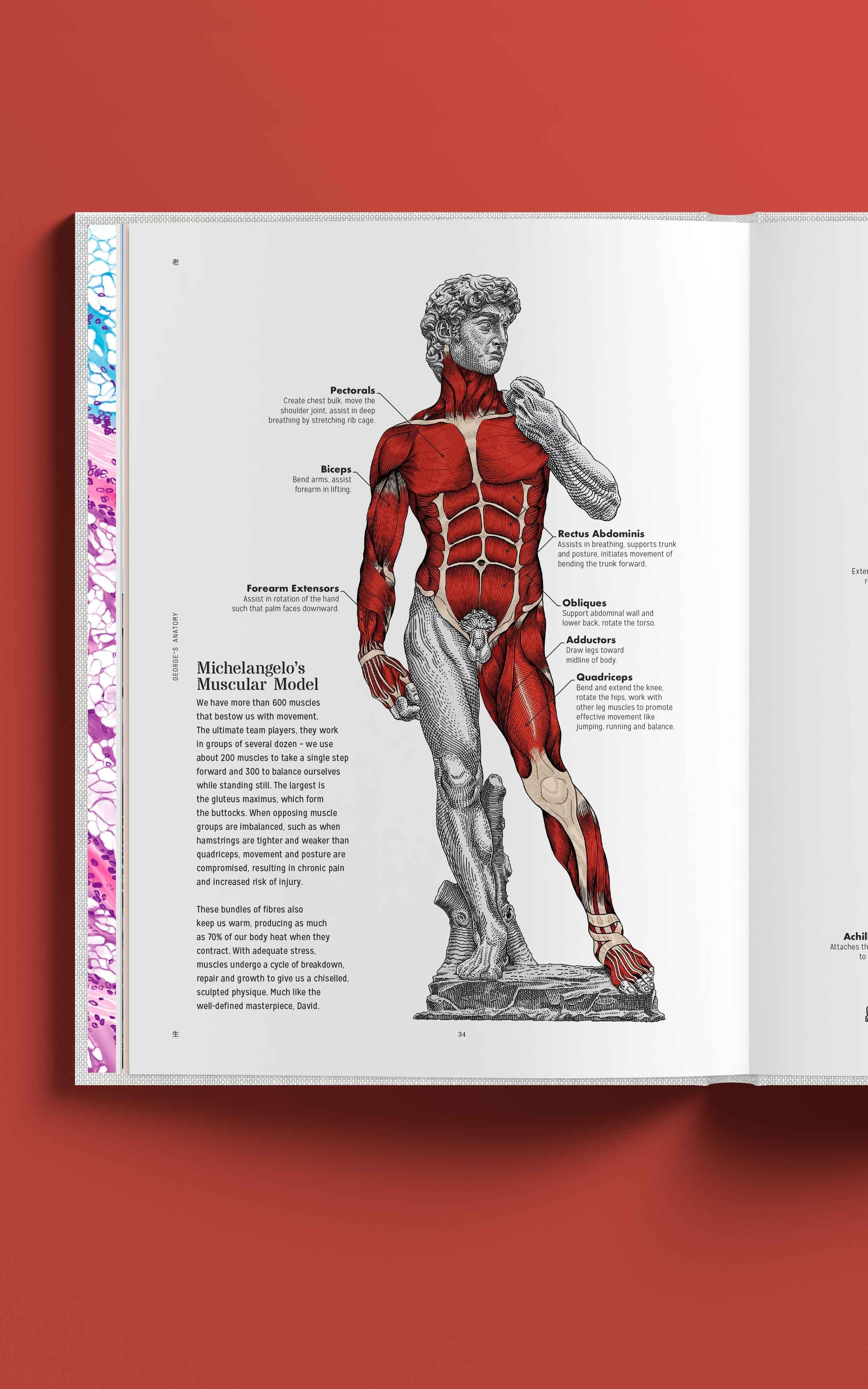 George's Anatomy – Lien Foundation's body of work & philanthropic pursuits through the human anatomy, Annual Report '16-17
